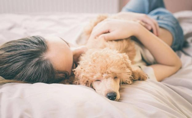 ¿Existe la baja laboral para cuidar a tu mascota enferma?